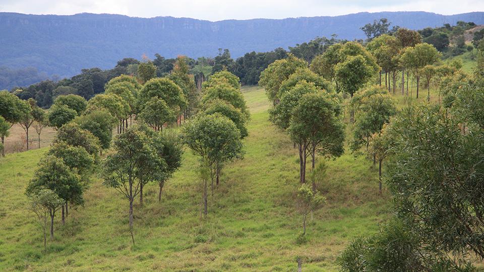 Timber-plantation