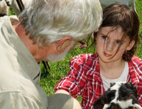 The role animals play at A Taste of Paradise Farm.